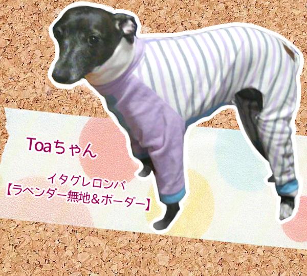 Toaちゃん